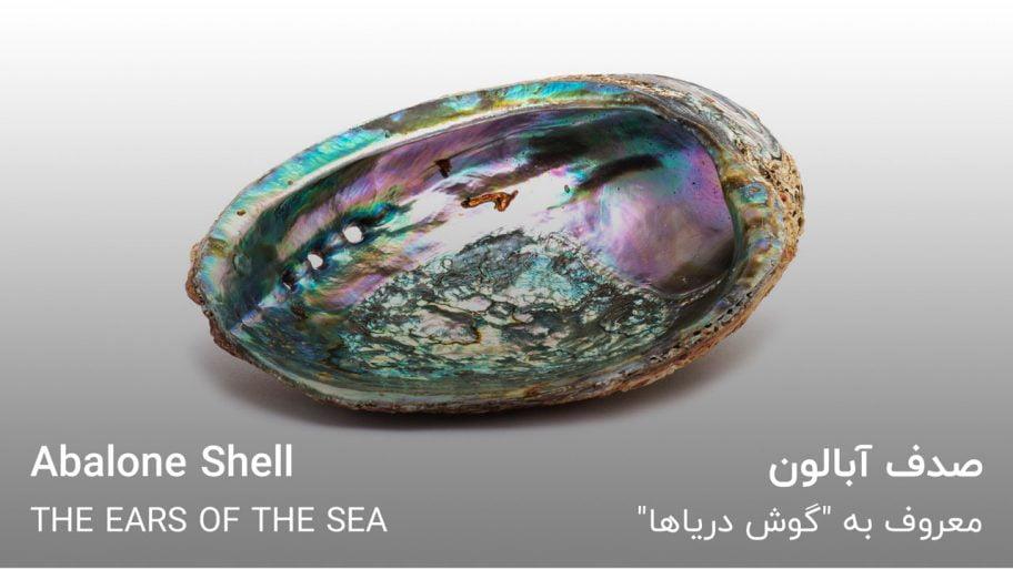 """خواص صدف آبالون Abalone Shell معروف به """"گوش دریا"""""""