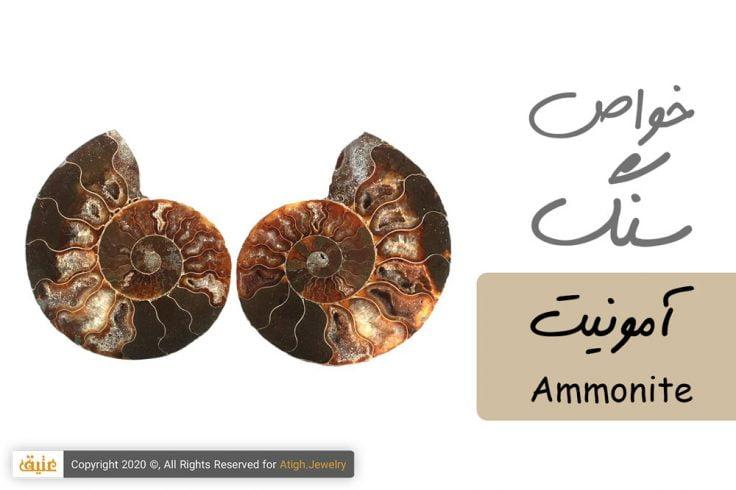 خواص فسیل آمونیت Ammonite